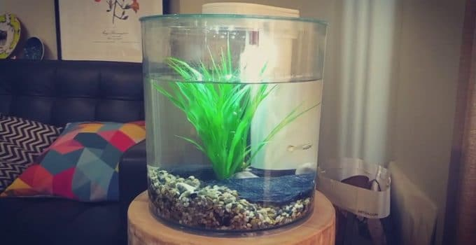 Best Cylinder Fish Tanks