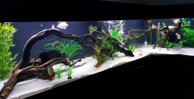 Best Driftwood for Aquariums
