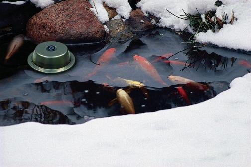 Pond Heater