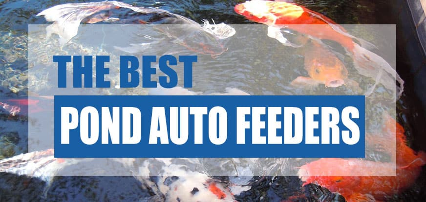 Best Automatic Pond Fish Feeders