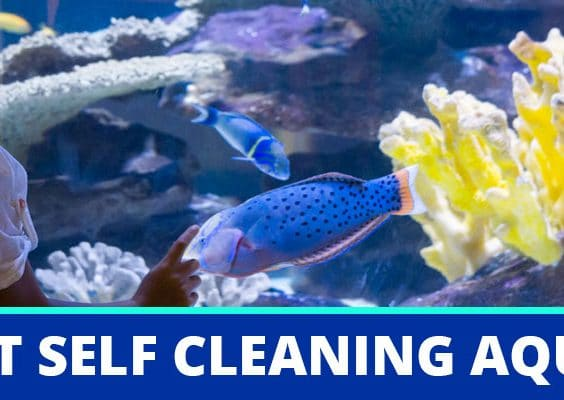 Best Self-Cleaning Fish Tanks