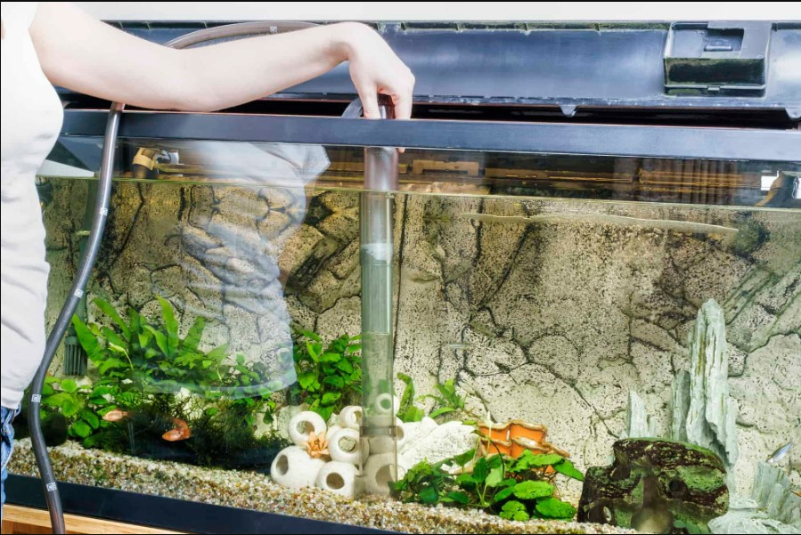 Why Self-Cleaning Aquarium than Regular Tanks