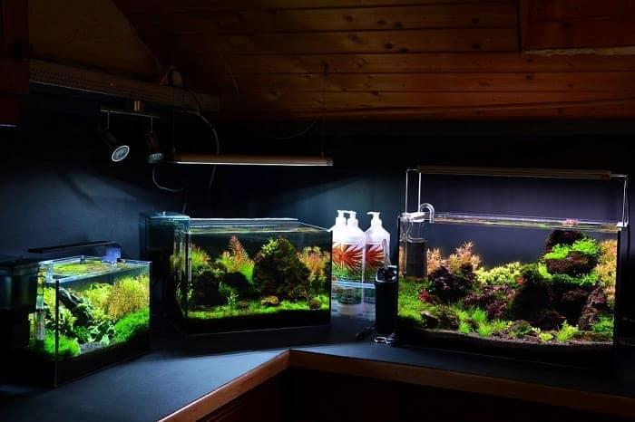 Types of Nano aquariums
