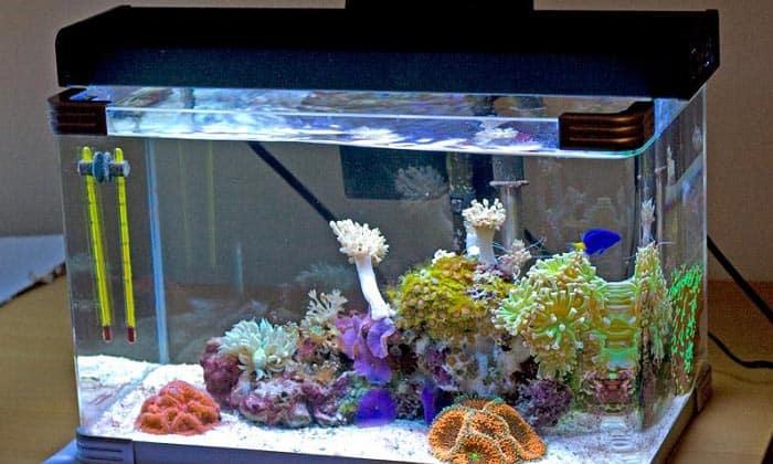 10 Gallon Fish Tank Buying Guide