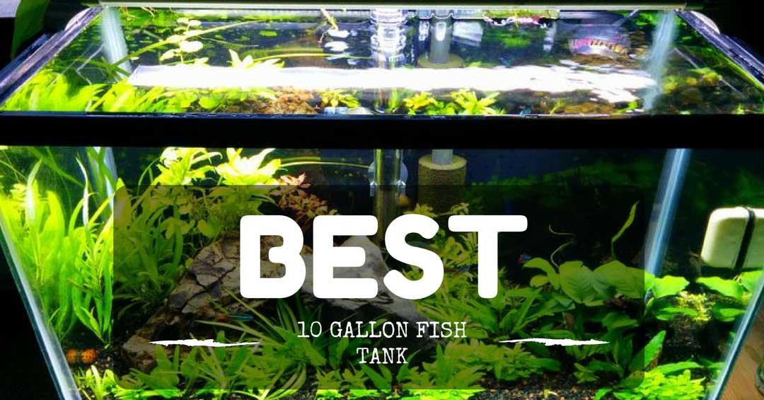 Best 10 Gallon Fish Tank