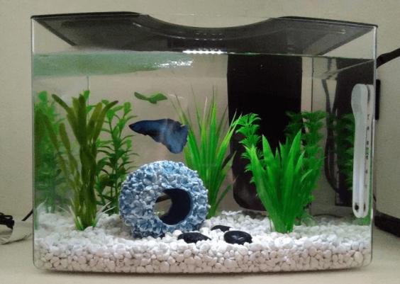 Best 2.5 Gallon Fish Tank
