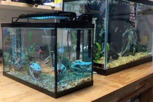 Best 3 Gallon Fish Tank