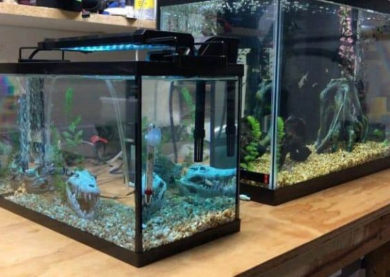 Best 3 Gallon Fish Tank