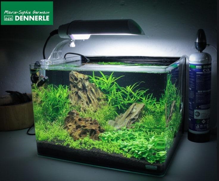 Dennerle Scaper's 10 Gallon Fish Tank