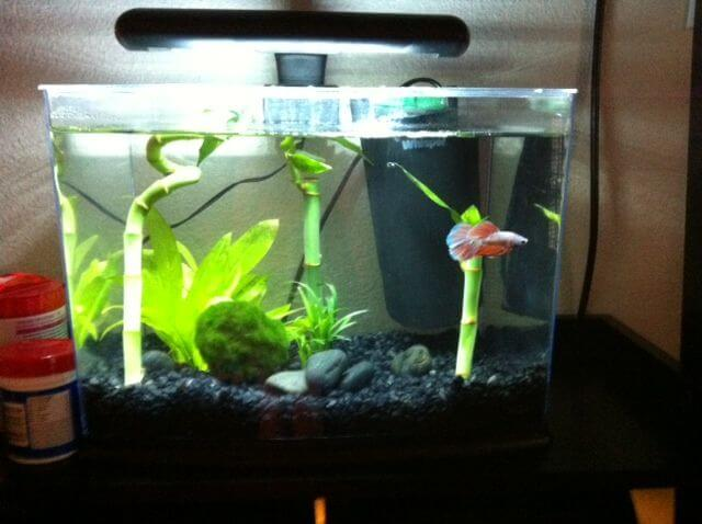 Different Types of 3 Gallon Fish Tanks