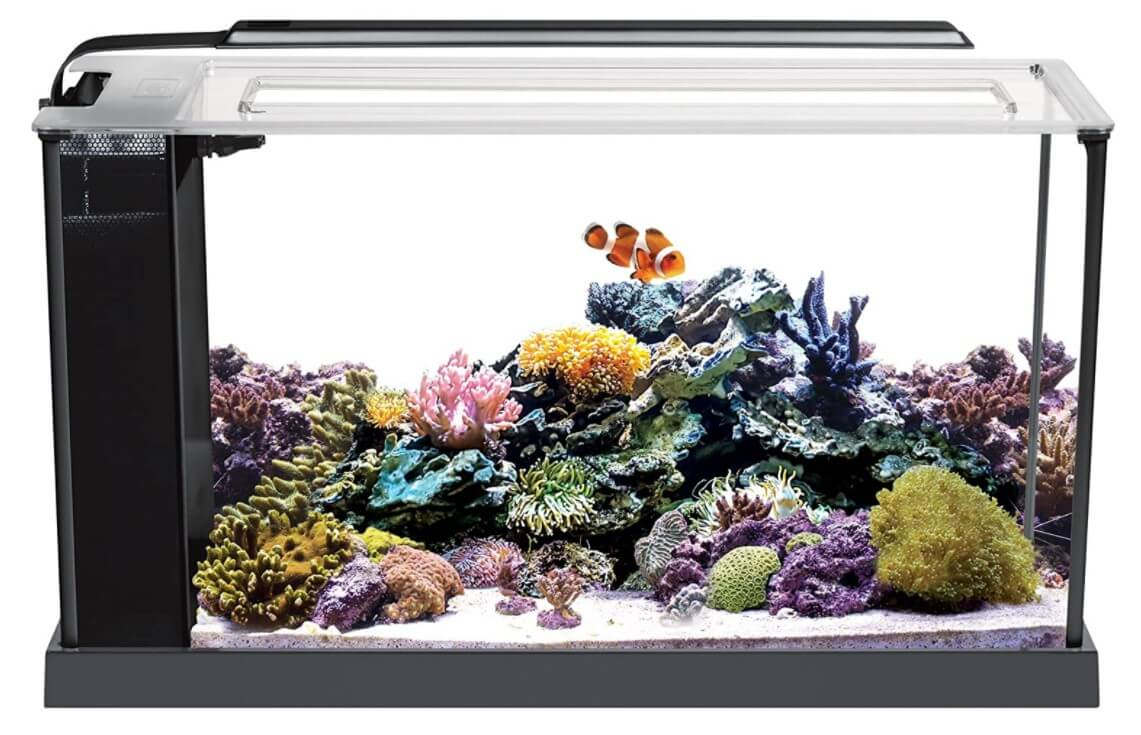 Fluval Sea Evo Saltwater 5 Gallon Fish Tank Aquarium Kit