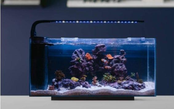 JBJ Rimless Desktop 10 Gallon Flat Panel Peninsula