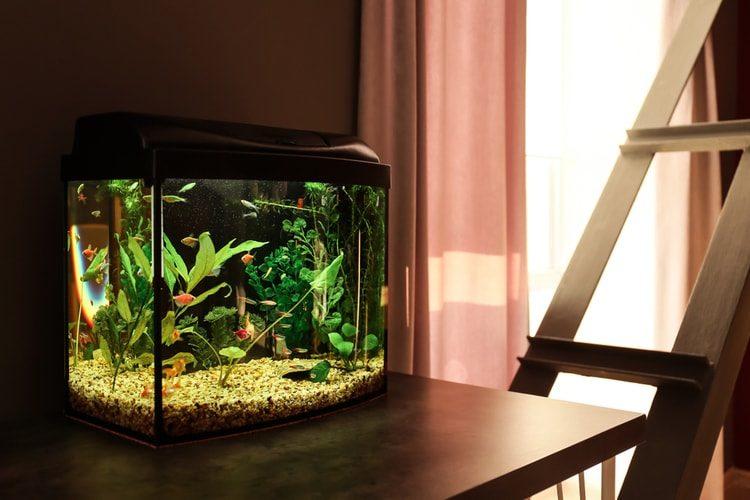 Popular Types of 15 Gallon Fish Tanks