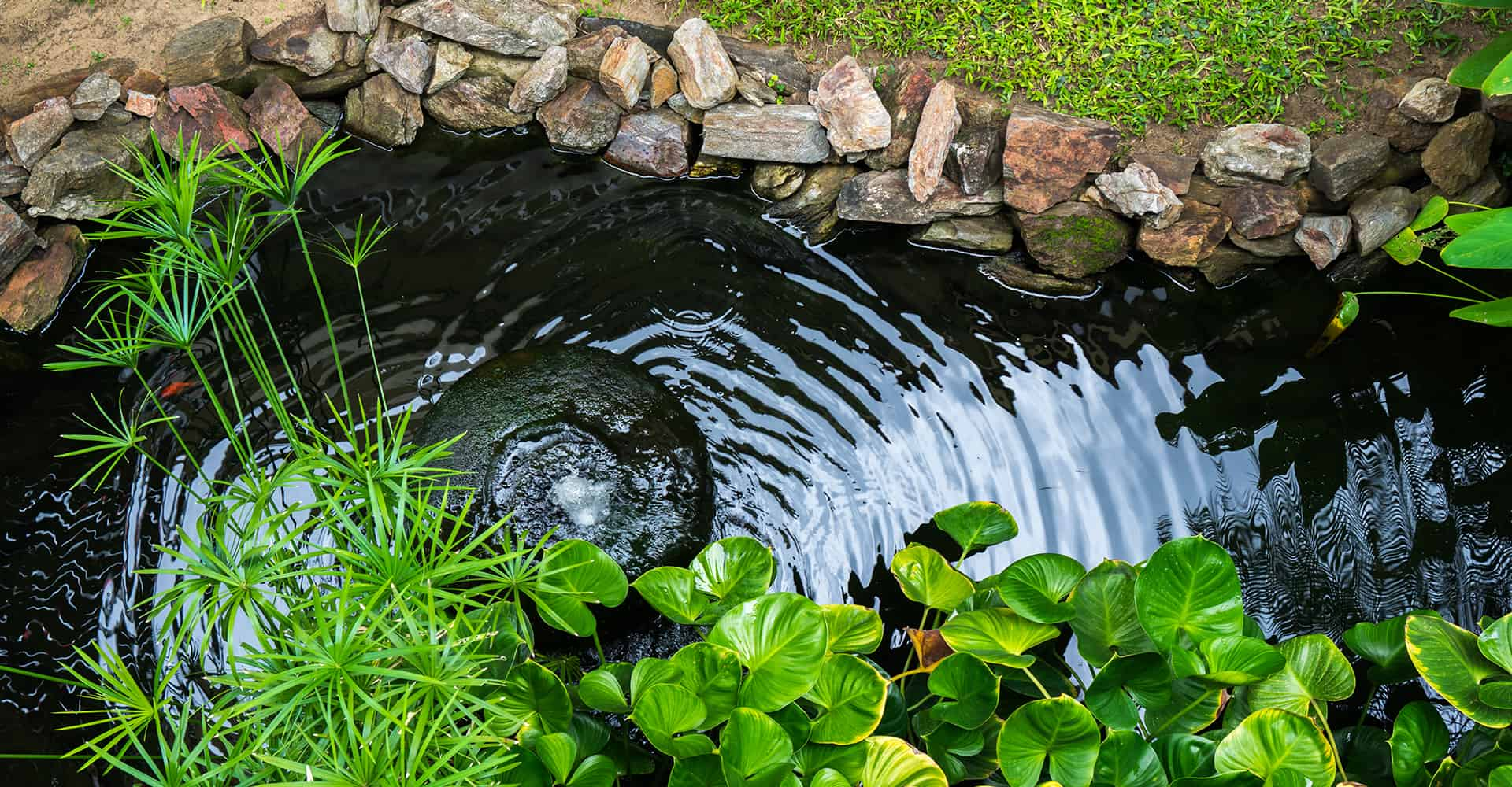Top 15 Best Pond Filters