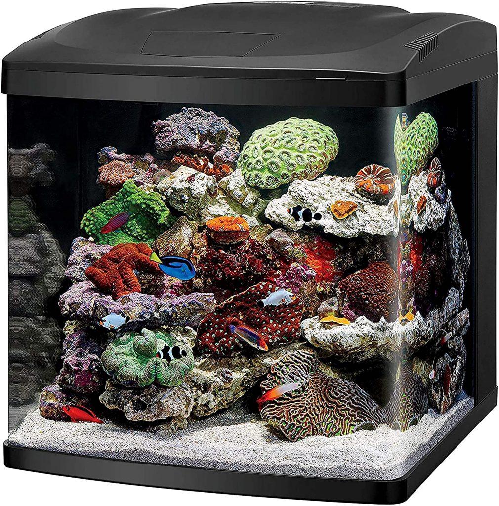 Coralife LED BioCure Starter Kit