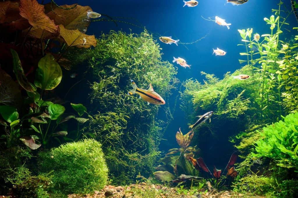 Best Aquarium Vaccum Gravel Cleaners