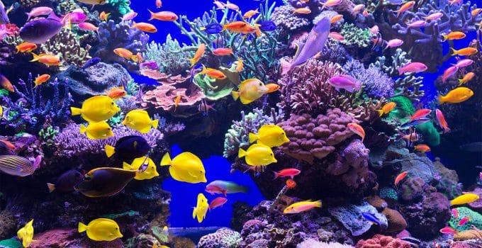 Best Reef Aquariums