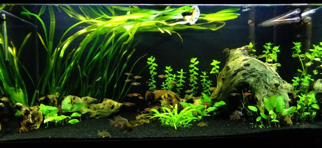 How to Choose The Right Aquarium Vacuum Gravel Cleaner?