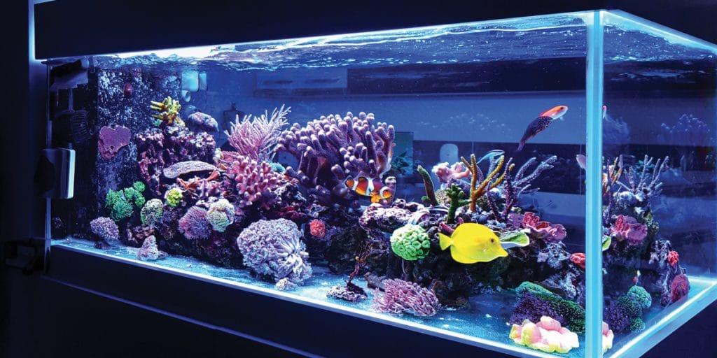 Setting Up a Reef Aquarium