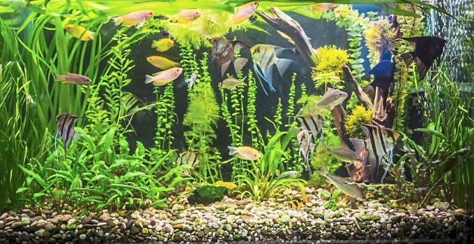 A 100-gallon fish tank with beautiful fish