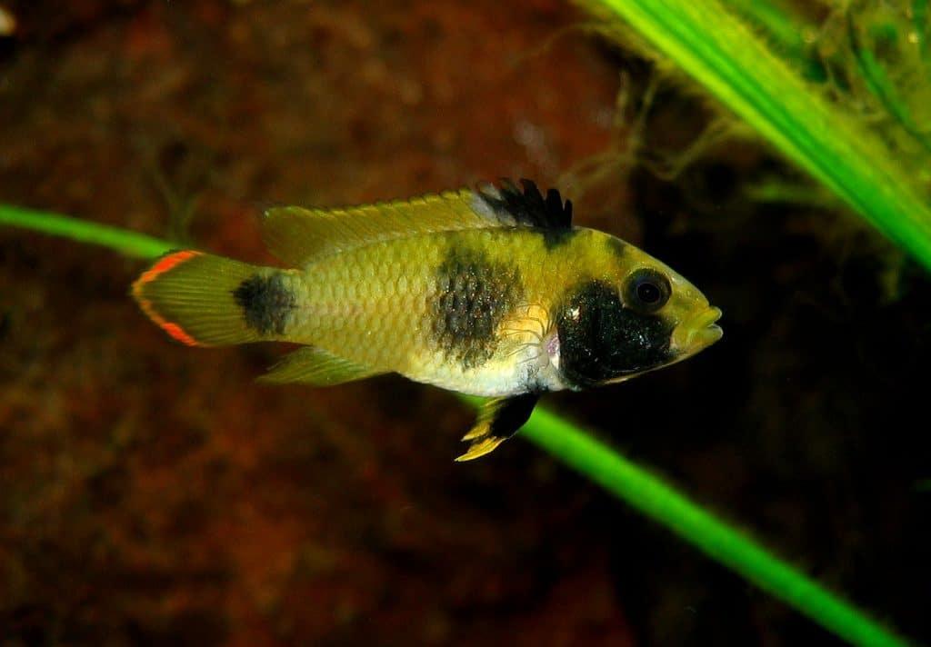 Fish Species Love Blackwater Aquariums