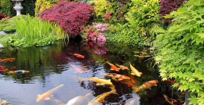 Best Pond Fish