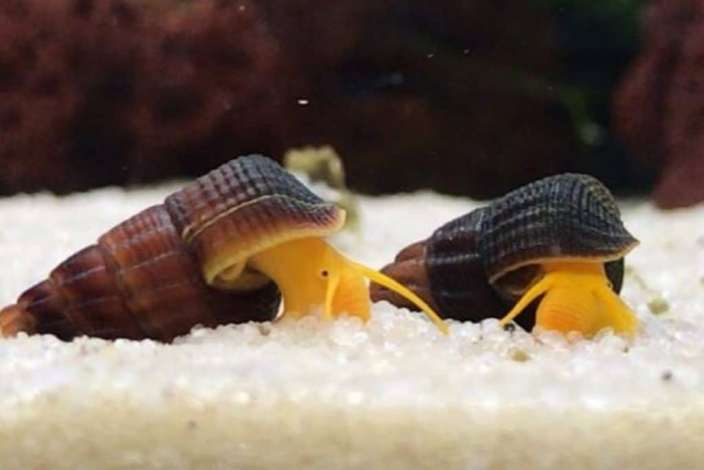 Rabbit Snails