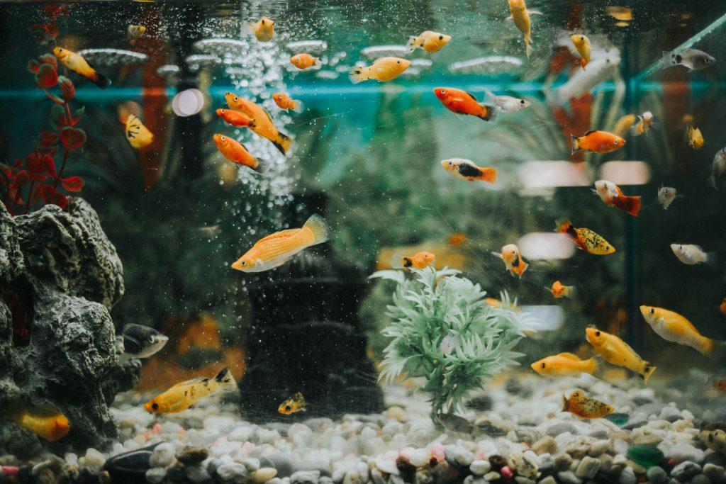 Benefits of Getting 100-Gallon Fish Tanks