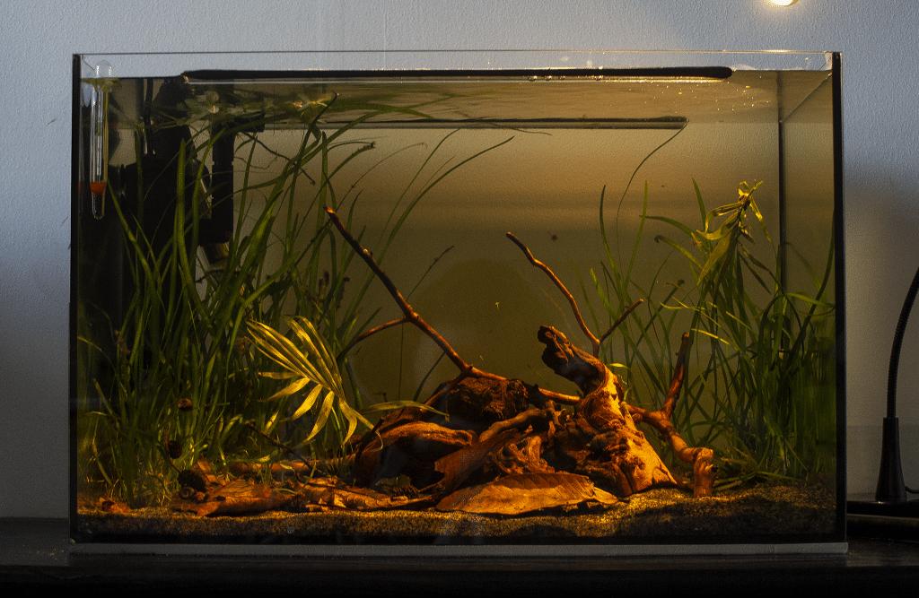How a Blackwater Aquarium Looks Like