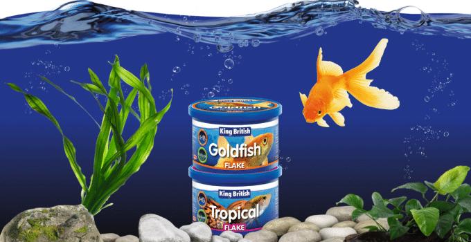 Best Fish Food