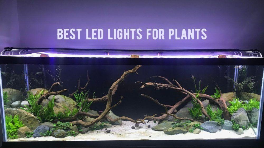 Best LED Aquarium Lights